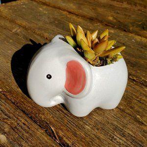 Elephant Animal Planter with Succulent, Ceramic